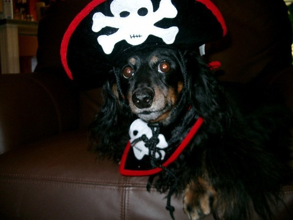 pirate-dogs1.jpg